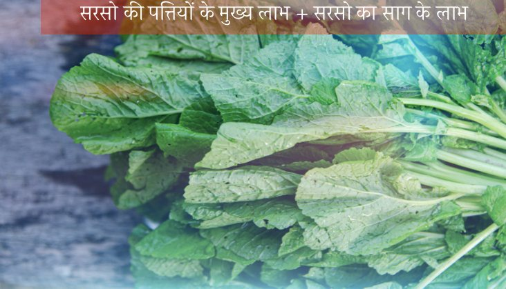 Mustard leaves Health Benefits